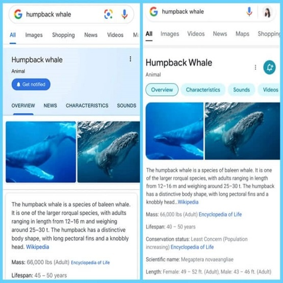 Google Search launches new look for mobile search results interface